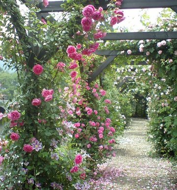 Rose_tunnel