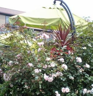 Hanging_parasol