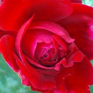 Rouge_royale