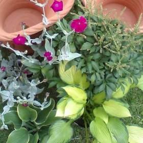 Perennial_plants