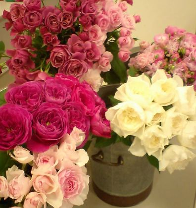 Fg_roses