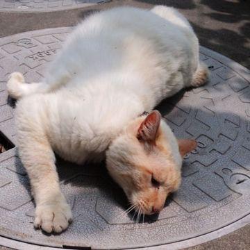 Chiro_loves_manhole