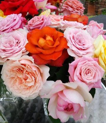 Cut_roses
