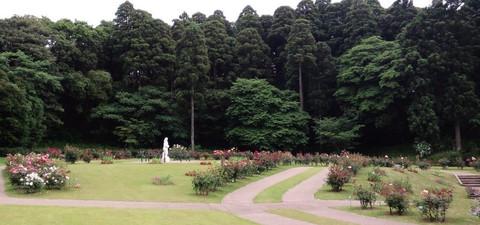 Roris_garden