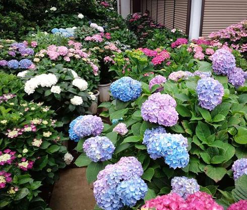 Ms_garden