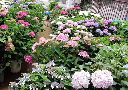 Ms_garden_3