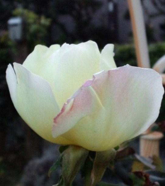 Neige_parfum__2